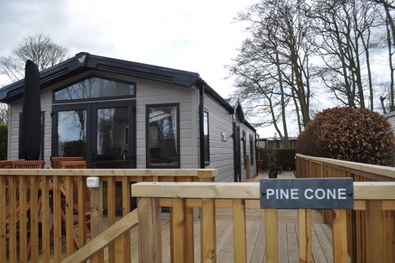 Pine Cone Image 1