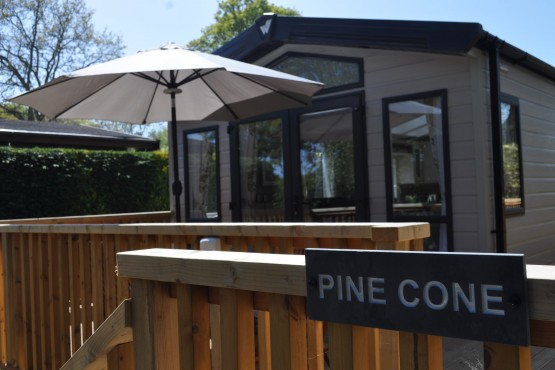 Pine Cone Image 14